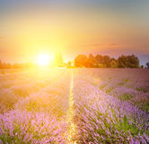 Sunset over a violet. Stock Images