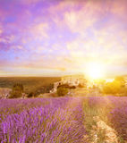Sunset over a violet. Royalty Free Stock Photography