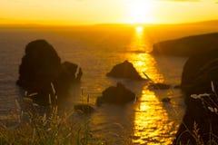 Sunset over the virgin rock with wild tall grass Stock Photos
