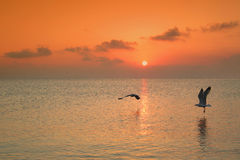 Sunset over water in Greece. With gulls flying near water surface Stock Images