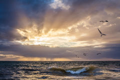 Sunset over water with wave breaking in the foreground. And seagulls flying in the sky royalty free stock photos
