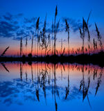 Sunset over a wetland Stock Photography