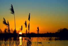 Sunset Over Wetland Royalty Free Stock Images