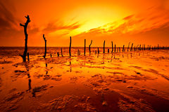 Sunset over the wetlands. With wood royalty free stock images