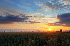 Sunset over wheat field. Stock Images