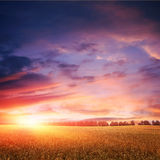 Sunset over wheat field with amazing clouds Stock Photography