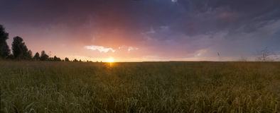 Sunset over wheat field. Royalty Free Stock Photo