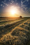 Sunset over wheat field Royalty Free Stock Photo