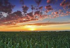Sunset over wheat field sun rays. Stock Photography