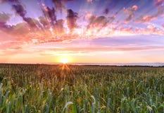 Sunset over wheat field sun rays. Stock Photo