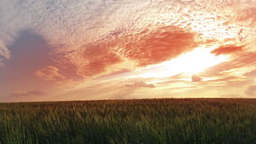 Sunset over wheat field. Timelapse Stock Photography