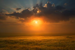 Sunset over wheat field towards the setting sun Royalty Free Stock Images