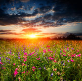 Sunset over wild flower meadow stock images