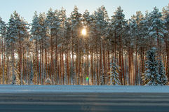 Sunset over a winter forest Stock Image