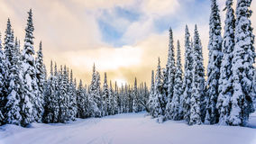 Sunset over the Winter Landscape with Snow Covered Trees on the Ski Hills stock image