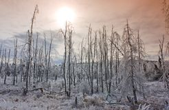 Sunset over wintry forest. Scenic view of sunset over bare trees in snow covered forest landscape Stock Photo