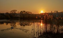Sunset ower the pond. Sunset over the pond with the swans stock photos