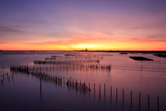 Sunset on oyster rack Stock Images