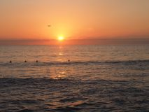 Sunset on the Pacific Ocean in Southern California. A stunning sunset with vibrant pink and orange skies taken at Grandview Beach in Carlsbad, California. A bird stock photo