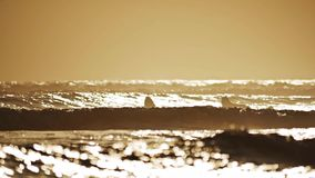Sunset Paddle Surfing slow motion. Slow motion footage of two girls paddling in the ocean stock footage