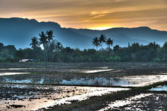 Sunset at Paddy field Stock Image