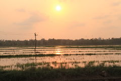 Sunset at a paddy field Royalty Free Stock Image