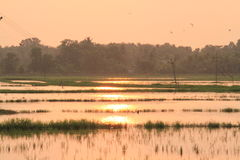 Sunset at a paddy field Royalty Free Stock Photo