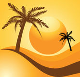 Sunset and palm Royalty Free Stock Photography