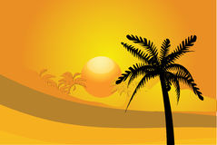 Sunset and palm Stock Image