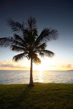 Sunset palm. Single palm tree at sunset stock photos