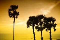 Sunset with palm Royalty Free Stock Photos