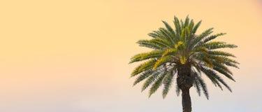 Sunset palm Stock Photos