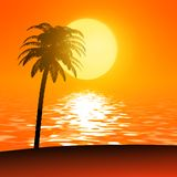 Sunset palm Stock Images