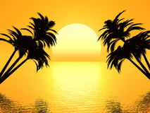 Sunset palm Royalty Free Stock Image