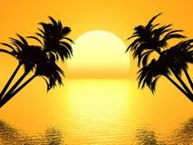 Sunset palm. Sunset and palm on beach,sun and sea,sun and palm