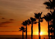 Sunset on palm beach. Sunset view on beach with palm trees Royalty Free Stock Photos