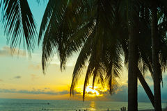 Sunset palm beach coastline summer Stock Photo