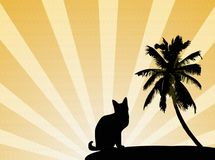Sunset, palm, cat Stock Image