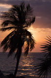 A Sunset Palm Royalty Free Stock Photo