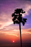 Sunset with palm Stock Photos