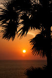 Sunset with palm Royalty Free Stock Photo