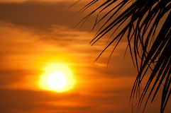 Sunset with palm Stock Photography