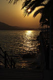Sunset. Through palm leaves at seashore at sunny summer day Royalty Free Stock Images