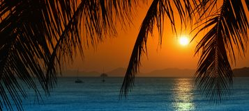 Sunset with palm leavs. Stock Photography