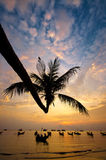 Sunset with palm and boats on tropical beach Royalty Free Stock Photography