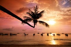 Sunset with palm and boats on tropical beach. Sunset with palm and longtail boats on tropical beach. Ko Tao island, Thailand Stock Photography