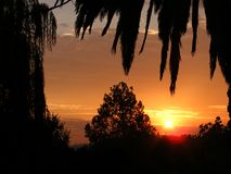 Sunset With Palm And Other Trees no. 2 Royalty Free Stock Photography