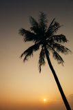 Sunset with palm silhoutte Stock Image