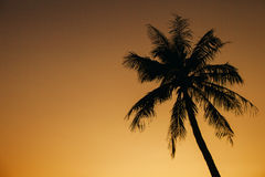 Sunset with palm silhoutte Royalty Free Stock Photo