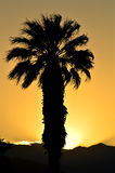 Sunset Palm. A single desert majestic palm tree blowing in the gentle desert breeze as the evening sunset and it rays of light fall behind the mountains stock photos